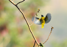 Flying bird in nature Stock Photography