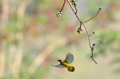 Flying bird in nature Royalty Free Stock Images