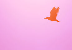 The flying bird  silhouette Royalty Free Stock Photography
