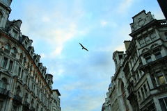 Flying bird in the sky over the buildings. A bird is flying with a spread wing in the sky over the buildings. Sky is the symbol of freedom,spirit, peace and Stock Image
