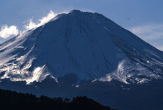 Flying bird with snow covered mountain Fuji Royalty Free Stock Photos