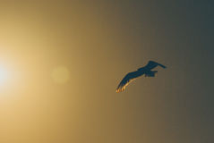 Flying bird with sun warm on the sky Stock Images