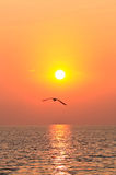 Flying bird with sunset. Seagull flying on the sky with sunset Stock Image