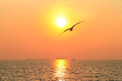 Flying bird with sunset Stock Image