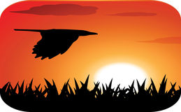 Flying bird at sunset. Flying bird silhouette at sunset Royalty Free Stock Photo