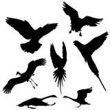 Flying bird vector silhouettes Royalty Free Stock Photos