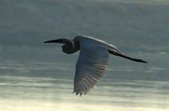Flying... Stock Image
