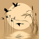 Flying birds. Drawing flying birds on background sun Royalty Free Stock Images