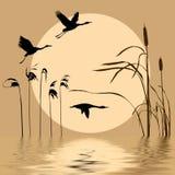 Flying birds. Drawing flying birds on background sun Vector Illustration