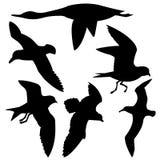 Flying birds. Vector silhouette flying birds on white background Stock Illustration