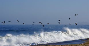 Flying birds. Seascape with flying birds an waves stock image