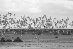 Flying Birds Stock Photos