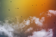 Flying birds. Against a decline and clouds Royalty Free Stock Images