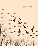Flying birds. Silhouettes of flying birds and trees, vector illustration Royalty Free Stock Photo