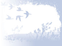 Flying birds. Landscape with silhouettes of flying birds; illustration stock illustration