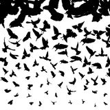 Flying birds. Background illustration with flying bird silhouettes Royalty Free Stock Photo