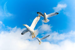 Flying birds. In the sky Stock Photo