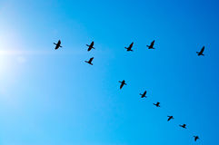 Flying Birds. On blue sky background Royalty Free Stock Photos