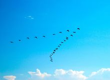 Flying birds. Silhouette of flying birds on blue sky background Stock Image