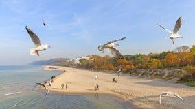 Flying birds above a beach. Royalty Free Stock Photos