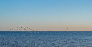 Flying birds above the water - peaceful evening seaside. Background royalty free stock images