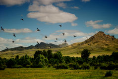 Flying birds against blue sky Stock Images