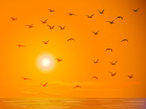 Flying birds against orange sunset. Stock Image