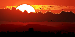 Flying birds against orange sunset in clouds. Royalty Free Stock Image