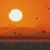 Flying birds against orange sunset ocer coast. Stock Photography