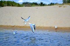 Flying birds beach Stock Photo