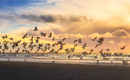 Flying birds at a beach on a sunny afternoon.  Royalty Free Stock Photos