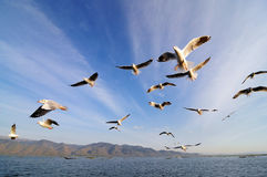 Flying birds in blue sky. This short was taken at Inle lake, Myanmar Stock Images