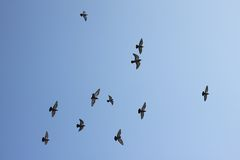 Flying birds Royalty Free Stock Photos