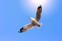 Flying birds. On blue sky Stock Images