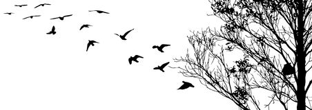 Flying birds and branch silhouettes on white background Royalty Free Stock Photos