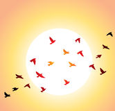 Flying birds and bright sun Royalty Free Stock Photography