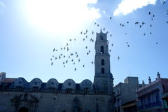 Flying birds city monument Cuba Stock Image