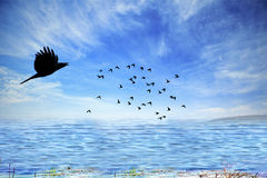 Flying birds with cloudy sky Royalty Free Stock Photo