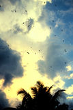 Flying birds. In fresh cloudy sky after tropical rain at sunset Royalty Free Stock Image