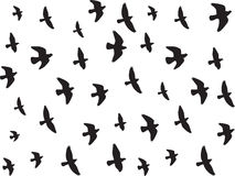 Flying birds isolated on white Stock Photos
