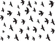 Flying birds isolated on white Stock Photos