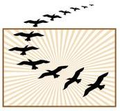 Flying birds logo. Beautiful flying birds line art logo design vector illustration