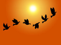 Flying Birds Means Summer Time And Sky Royalty Free Stock Photos