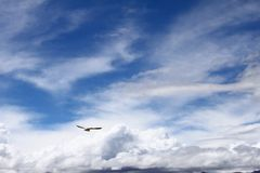 Flying birds at Namsto lake Tibet plateau. A bird fly toward the snow Royalty Free Stock Photo