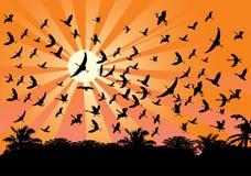 Flying birds opposite bright sun Stock Photo