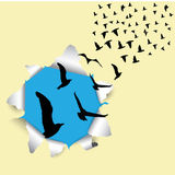 Flying birds outside the box vector illustration Royalty Free Stock Photos