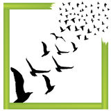 Flying birds outside the box vector illustration Stock Photo