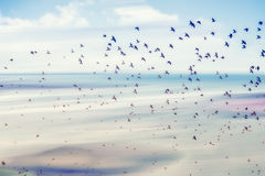 Flying birds Royalty Free Stock Photo