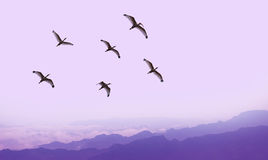 Flying birds over purple background landscape Royalty Free Stock Images