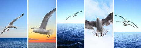 Flying birds over sea stock image